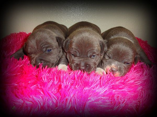 10 Cutest Pets For Sale On Craigslist In Lufkin Nacogdoches And