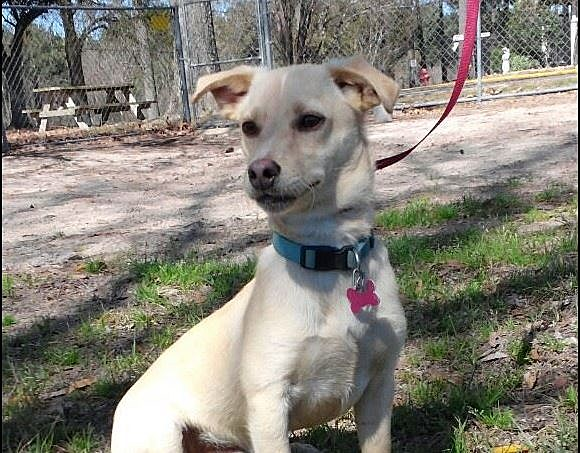 Search Results For Craigslist East Texas Pets Bcitc Org