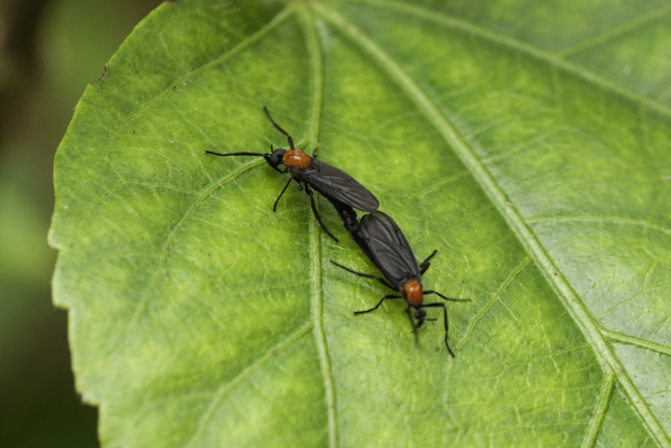 Flying Around With A Dead Partner And Other Lovebug Facts