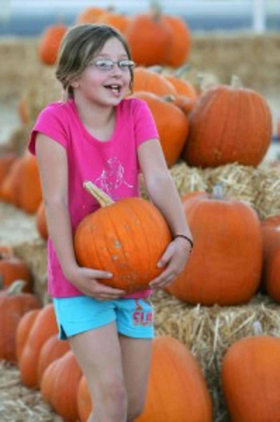 Pumpkin patch presented by jlsb provenance.