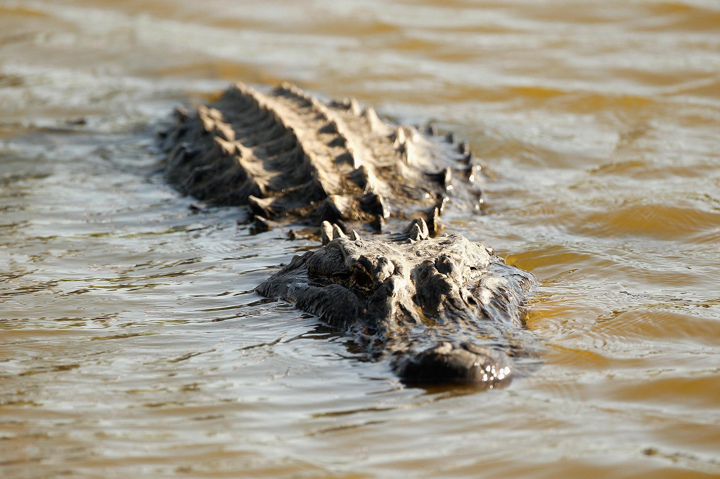 Swamp People Star Dies In Car Crash Over The Weekend