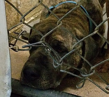 Image of: Netflix Power 959 Dogs In Danger At The Texarkana Animal Shelter videos