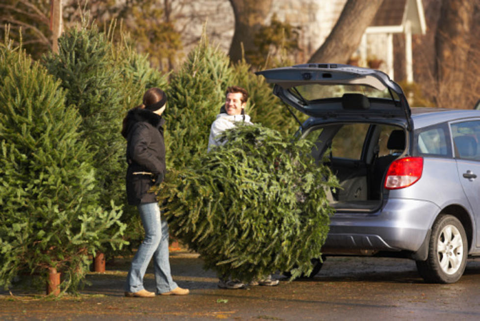 - Where To Buy A Fresh Christmas Tree In New Jersey