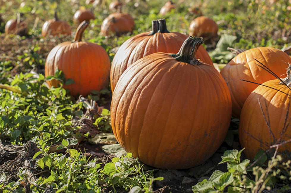 Best pumpkin patches in upstate ny: 21 picking destinations for.