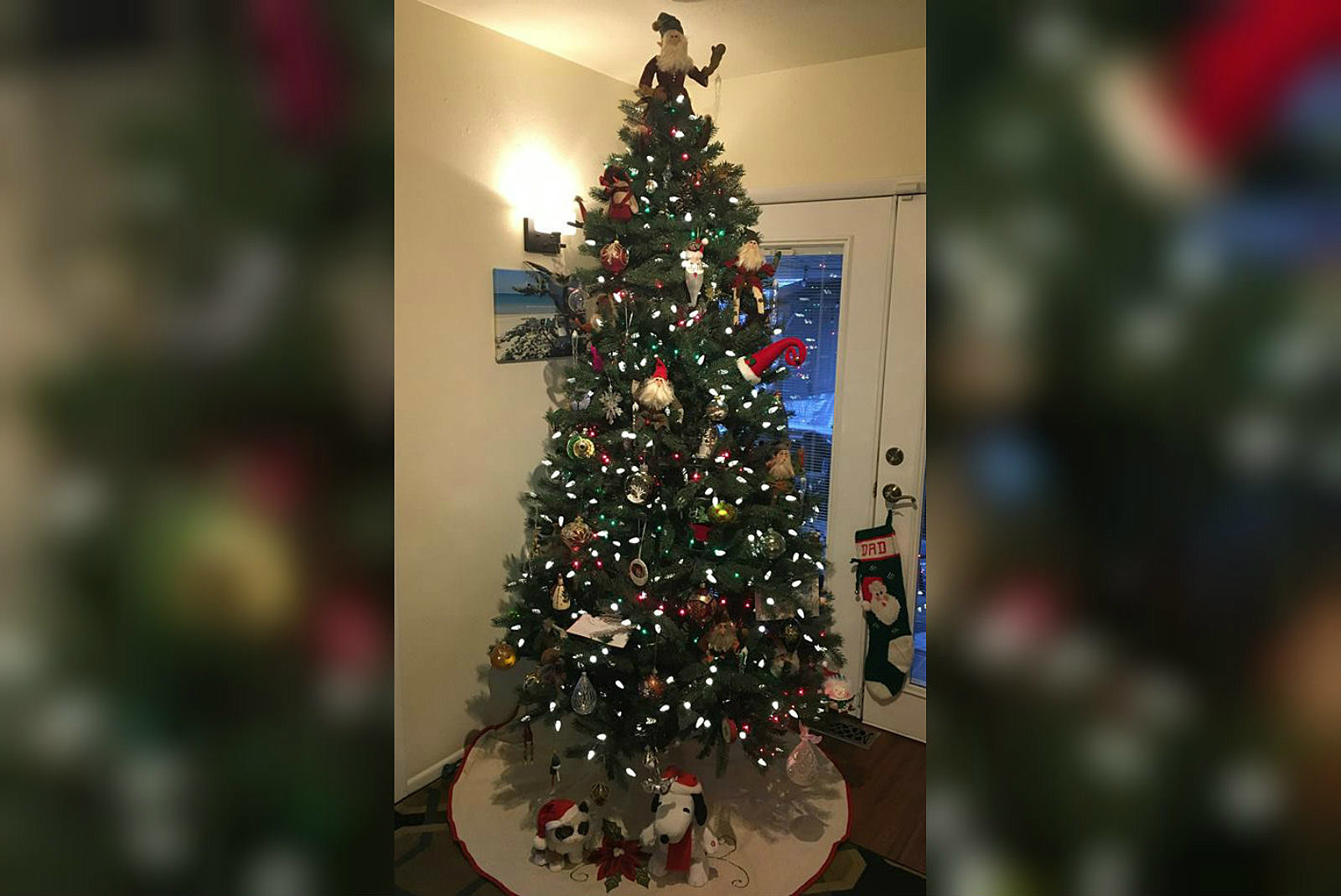 Take a Look at Some of Western Colorado\'s Best Christmas Trees