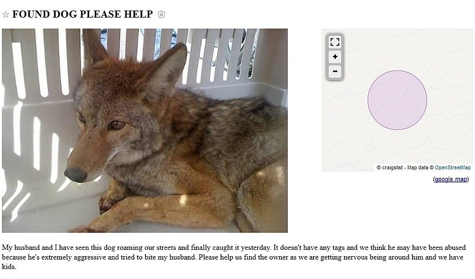 El Paso Craigslist Ad Seeks To Find Owner Of Found Dog But It S Not