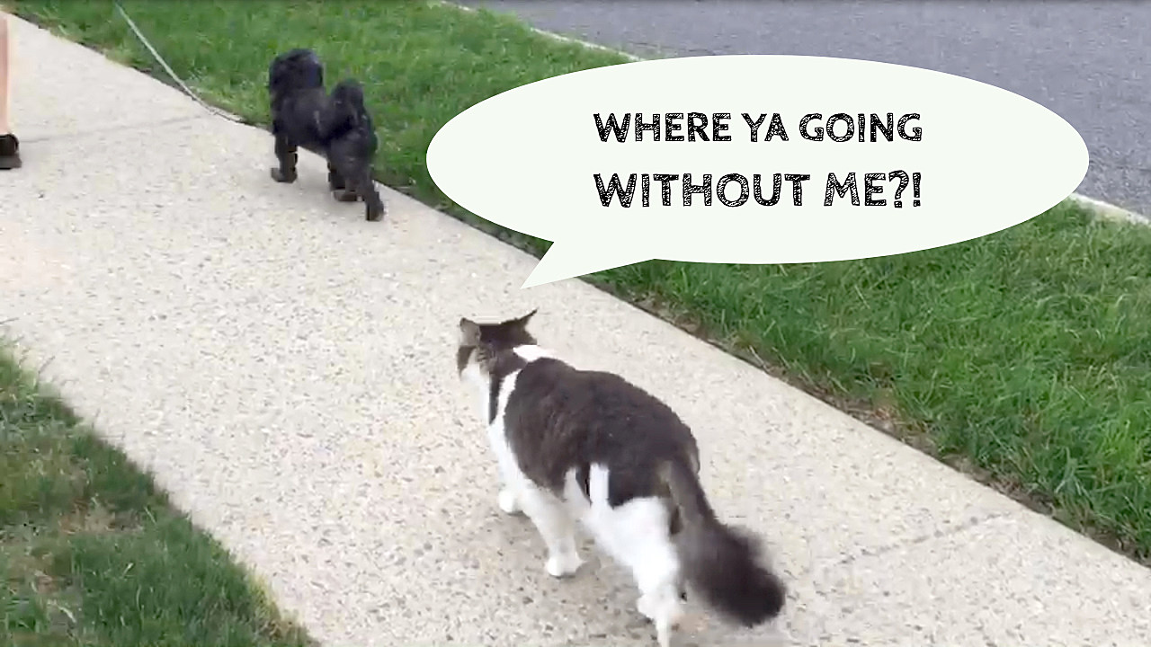 My Cat Must Follow My Dog Everywhere See For Yourself Video