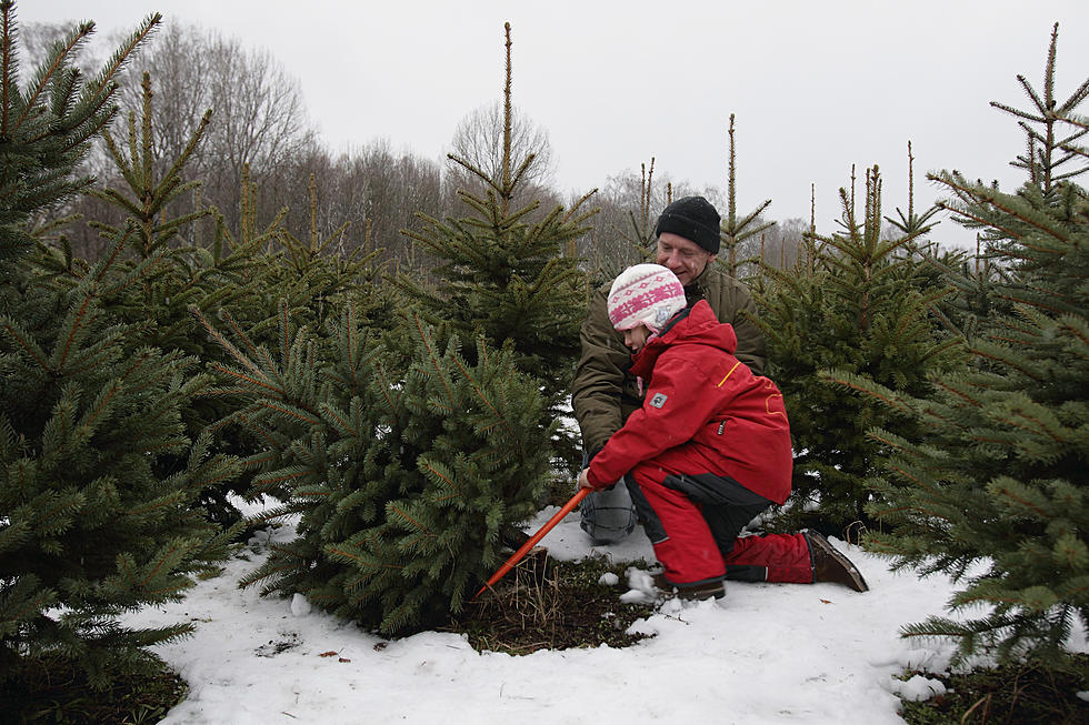 - Here Are Places You Can Cut Your Own Christmas Tree In Central Minnesota