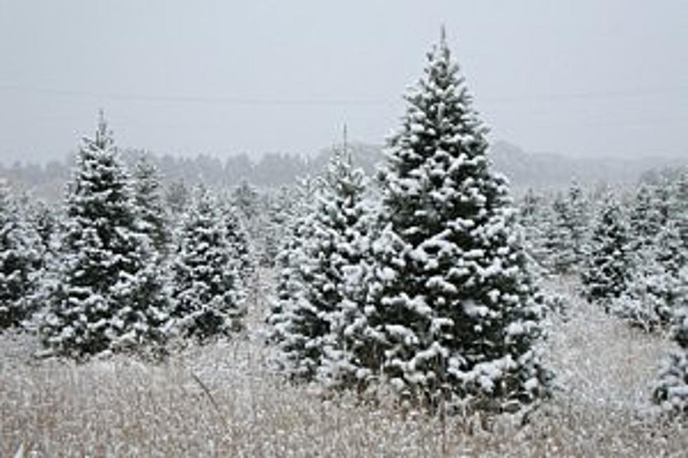 - 5 Best Christmas Tree Farms In Central Minnesota