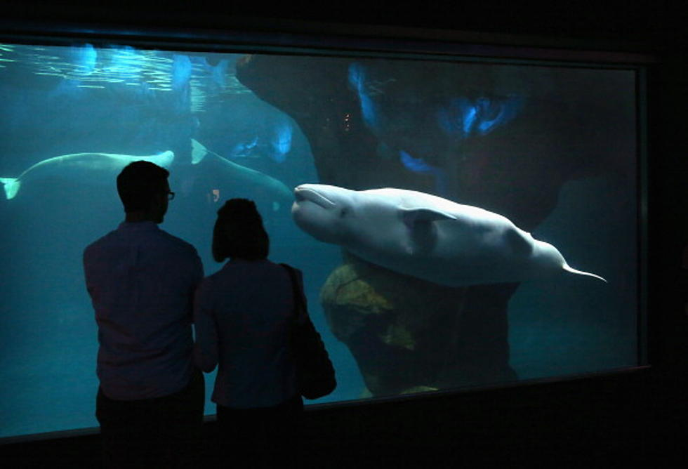 shedd aquarium free all september for illinois residents