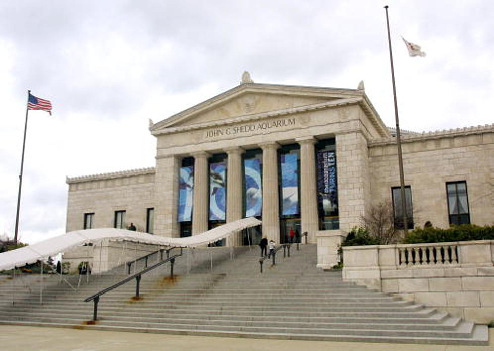 Shedd Aquarium Announces 2018 Free Days
