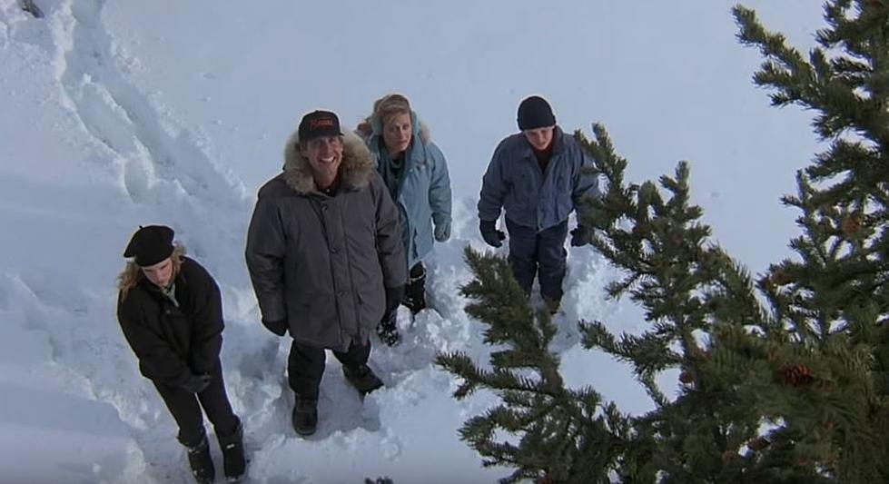 - Live Like The Griswold's And Cut Your Own Christmas Tree In Idaho