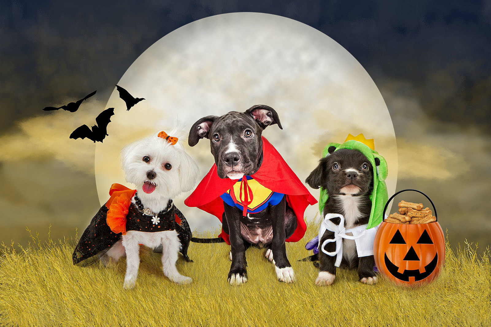 show us your pet's halloween costume and win!