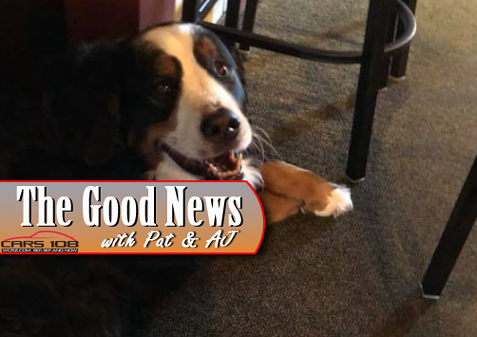 Veteran Former Auto Exec Therapy Dog Have Their Own Mi Tavern