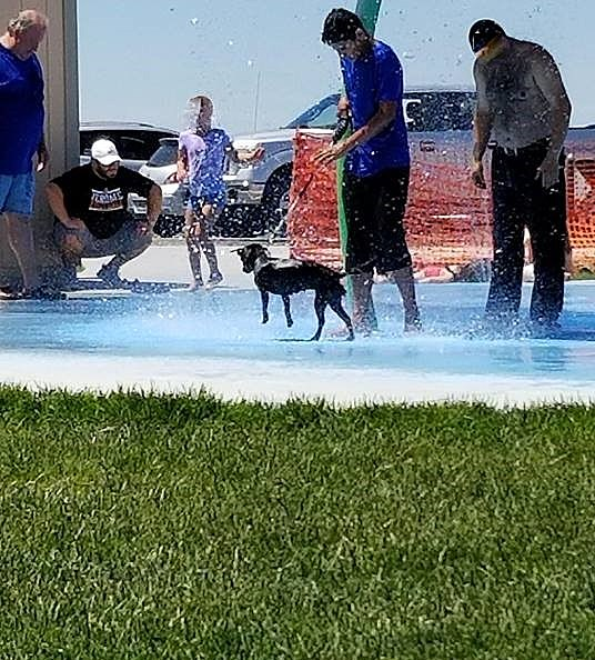 dog in splash park