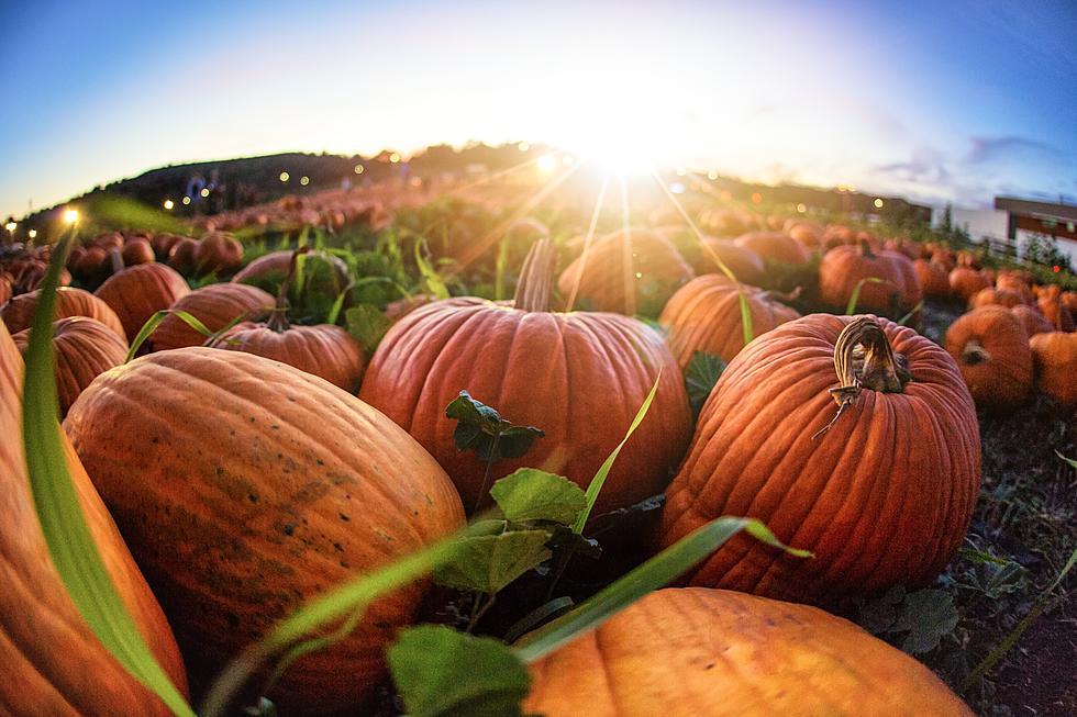 Pumpkin picking demarest farms orchard, farm store & garden center.