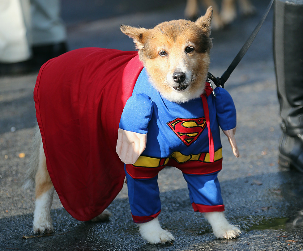 this year's most creative pet halloween costume ideas