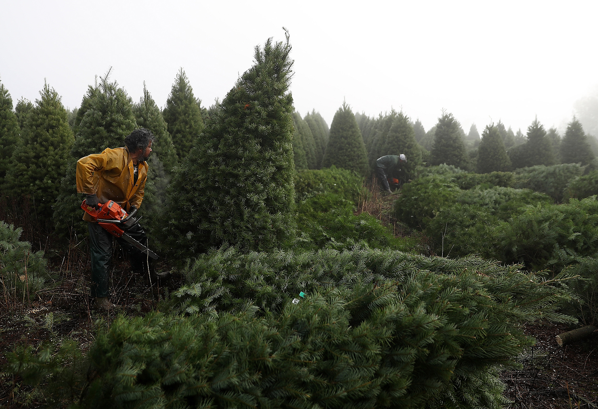 A Christmas Tree-Infesting Bug Was Just Spotted in New Jersey