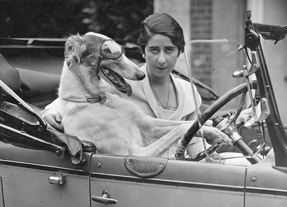 dog-driving-car.jpg?w=980&q=75
