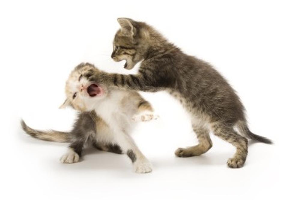 Erie County SPCA Offering Half-Priced Feline Adoptions