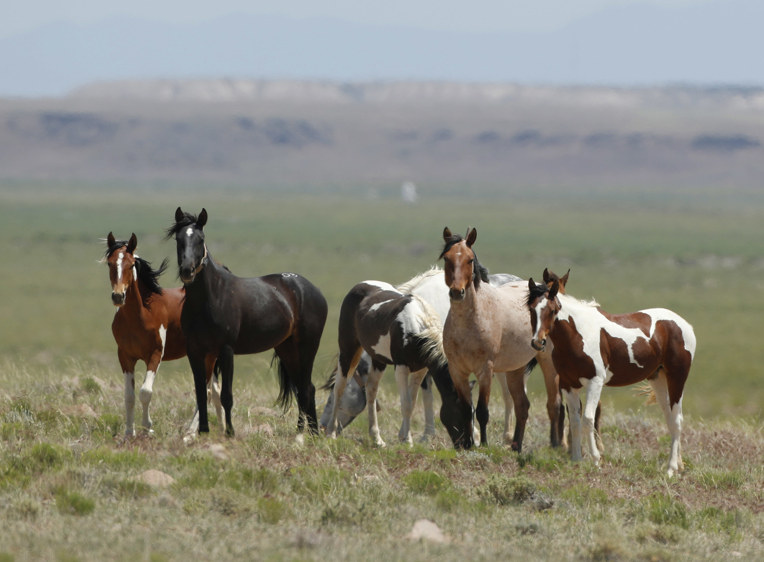 Blm Planning To Remove Wild Horses In Northwest Wyoming This Fall