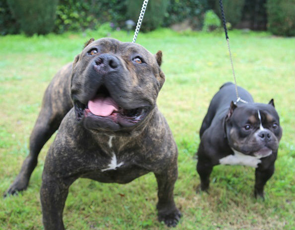 Casper City Council: No Plan to Ban Pit Bulls or Other Dogs