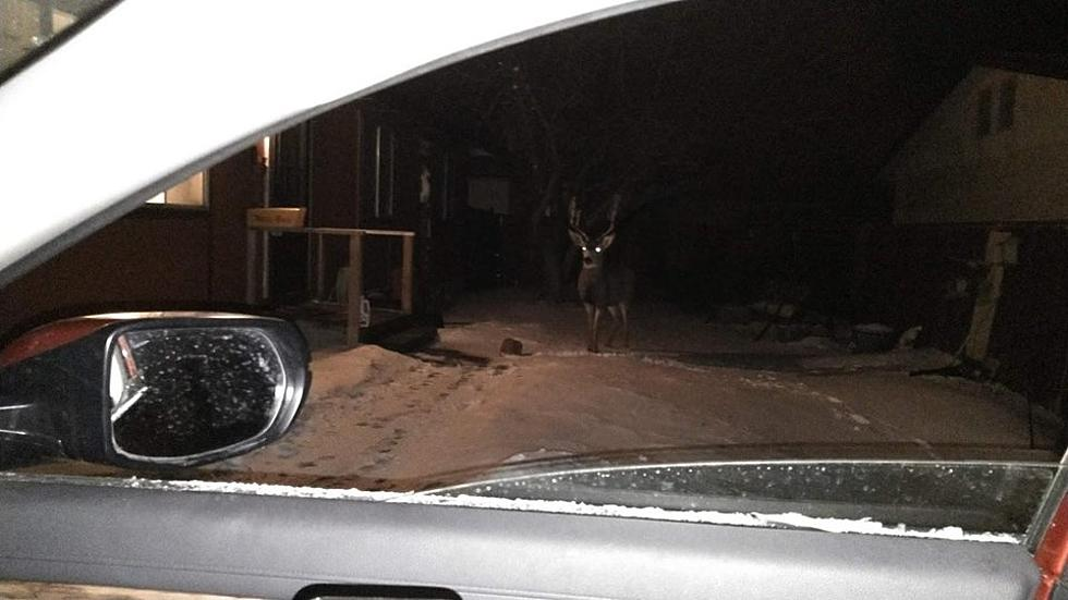 Wyoming Man Finds This Guy Eating Apples Outside His Window