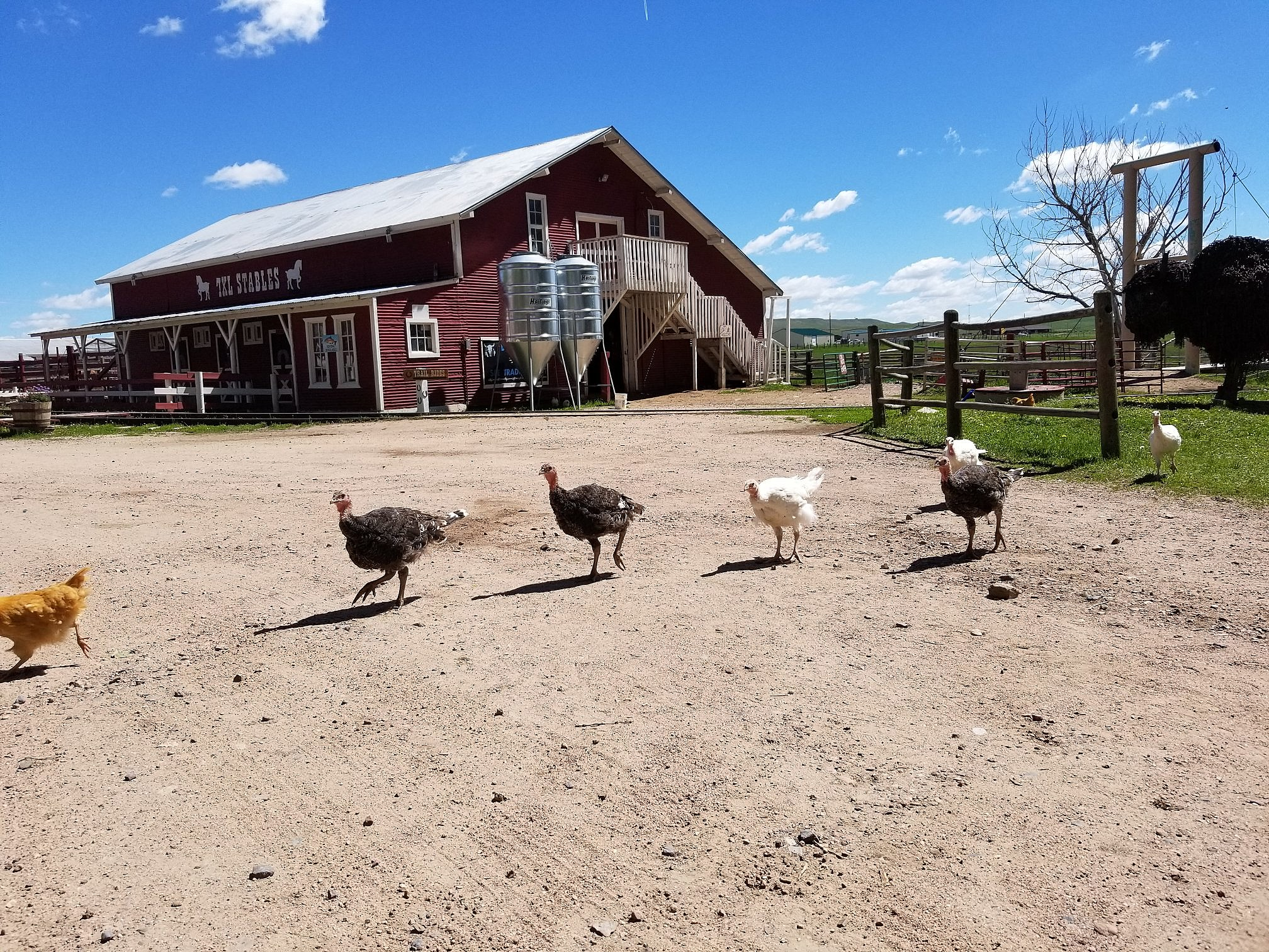 The Terry Bison Ranch In Cheyenne Is THE Place To Be