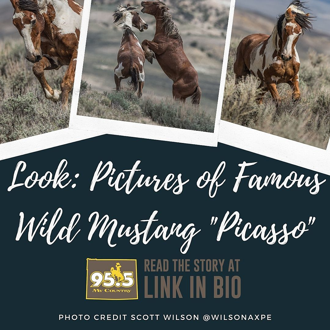 Look At These Stunning Pictures Of Famous Wild Mustang Picasso