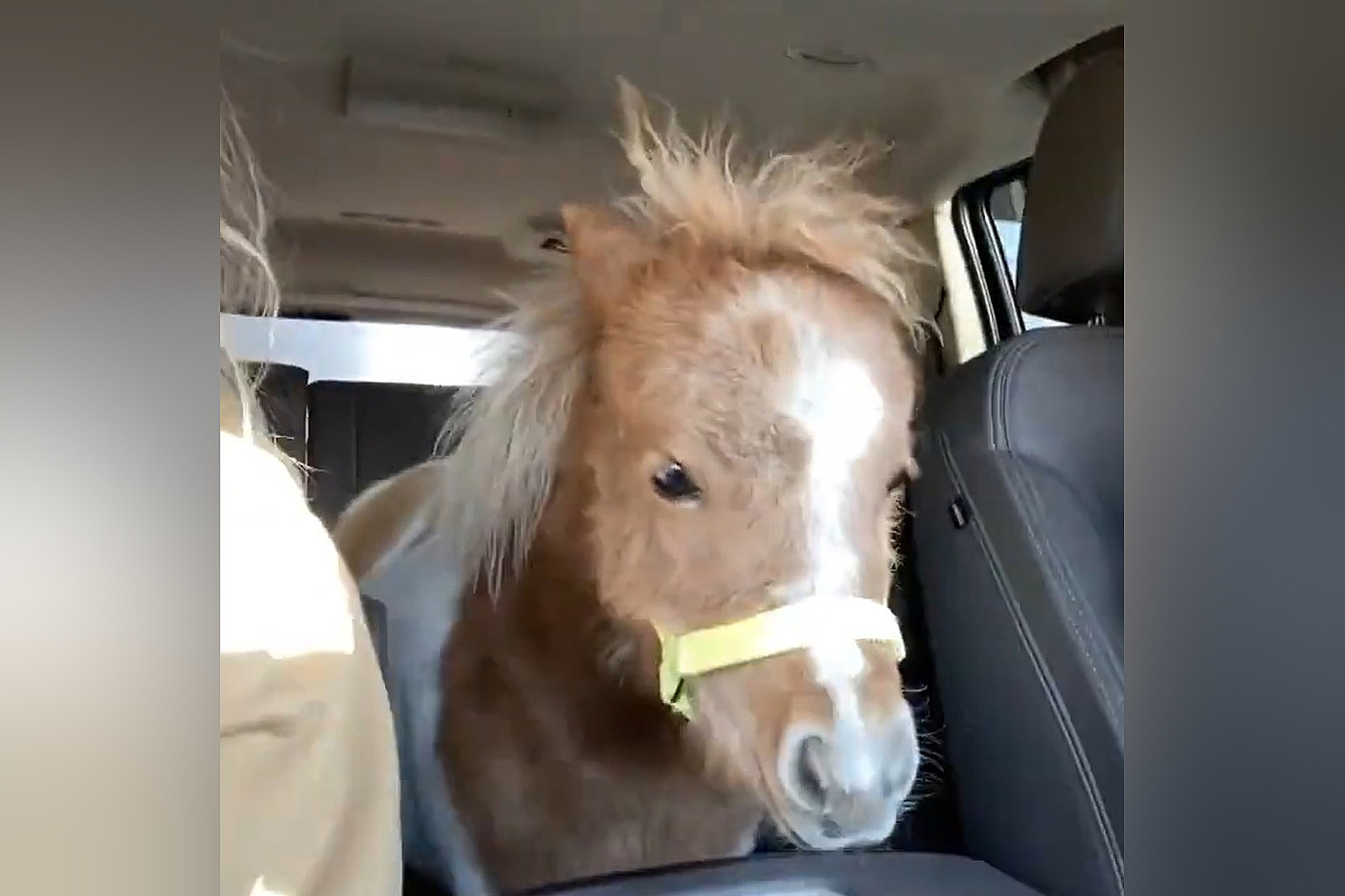 Watch a Wyoming Family Bring Tiny Horse Home in Their Denali