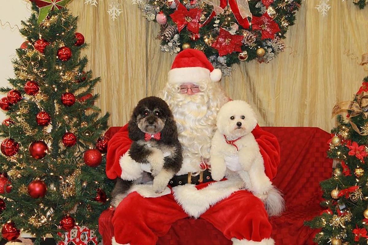 Get Fur-Kid Photo's With Santa at Petsmart Saturday!