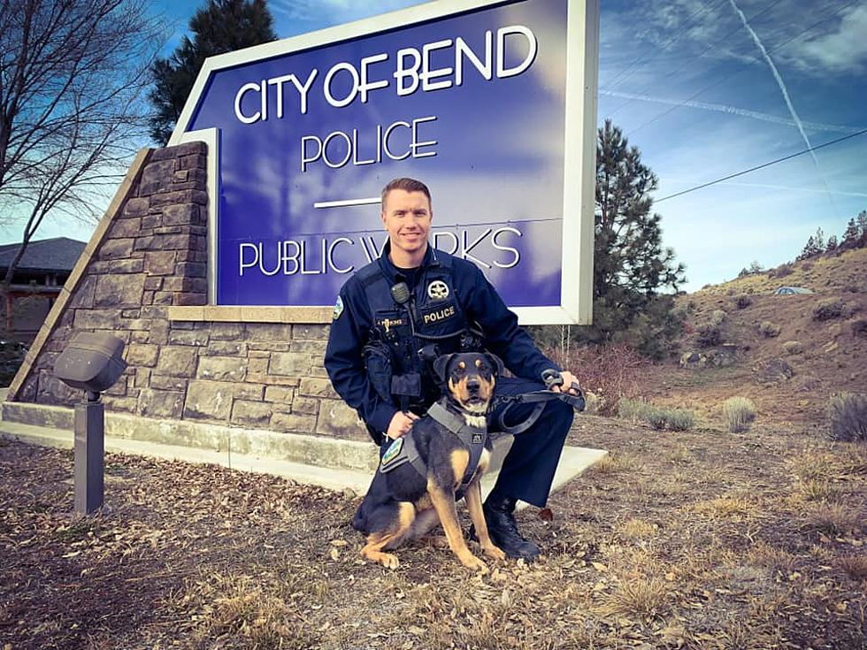Walla Walla Stray Dog Gets Second Chance As K-9 Officer In ... on police officer benefits, police officer home, police job application printable, police officer job requirements, police officer job information, police officer departments, police officer contact, police officer job description, police officer mission statement, police officer job cover letter, police officer code of conduct, police officer complaint form, police officer survey, police officer careers, police officer internships, police officer letters of recommendation, police officer job openings, police officer service, police officer job resume, police officer interview,