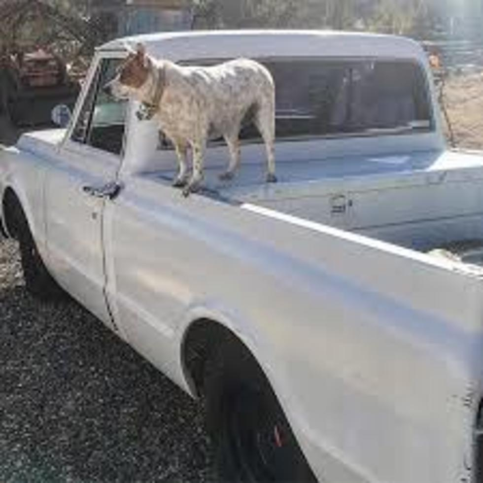 Debate Settled Illegal For Unsecured Animal In Back Of Truck