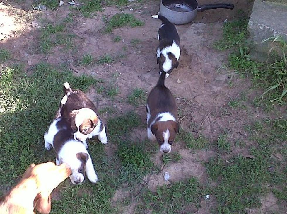 10 Cutest Pets For Sale On Craigslist In Lufkin, Nacogdoches And