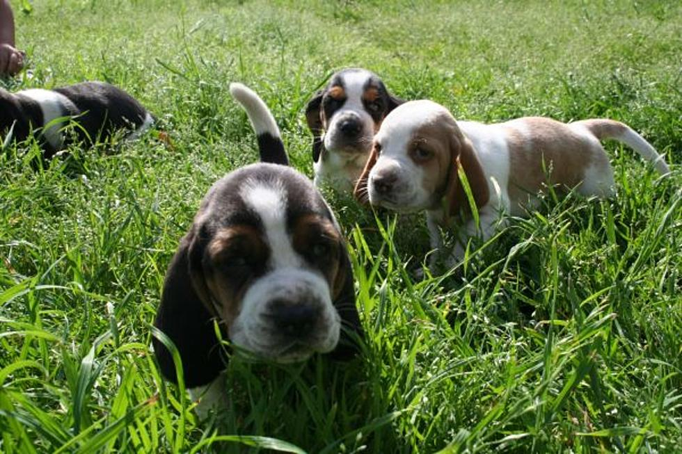 10 Cutest Pets For Sale On Craigslist In Lufkin, Nacogdoches