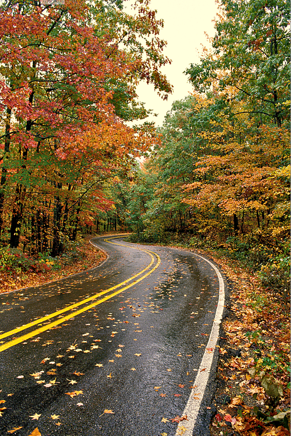 Arkansas Fall Colors 2020.Best Drives In Arkansas For Fall Foliage This Year