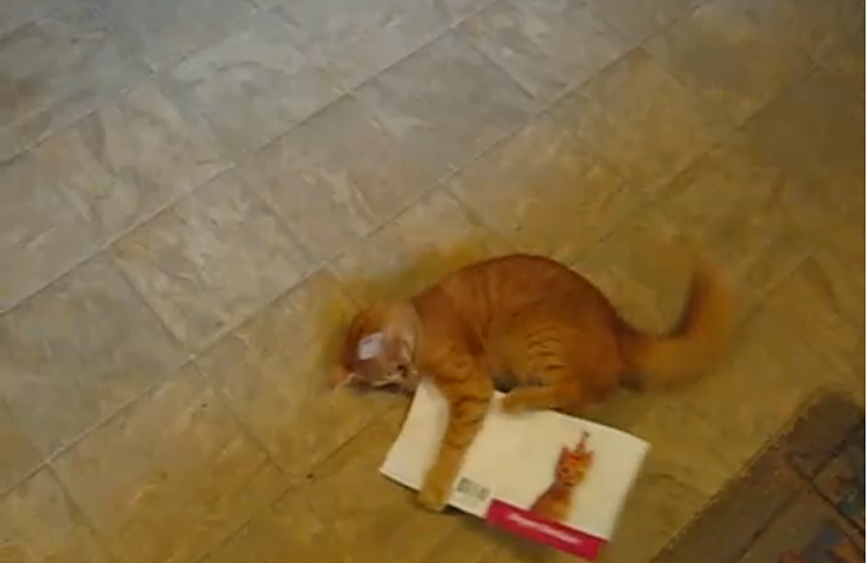 Lulu The Cat Attacks Her Singing Birthday Card Hilarious VIDEO