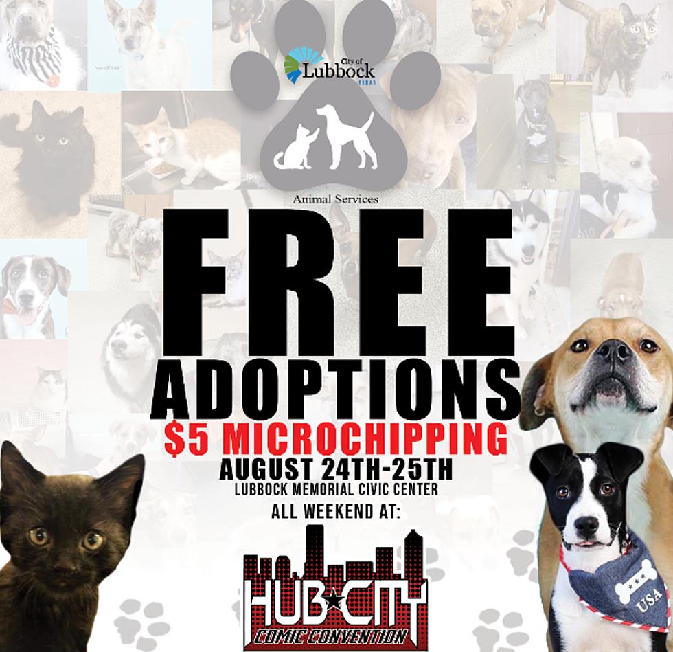 Hub City Comic Convention Has Free Pet Adoptions, $5 Microchips