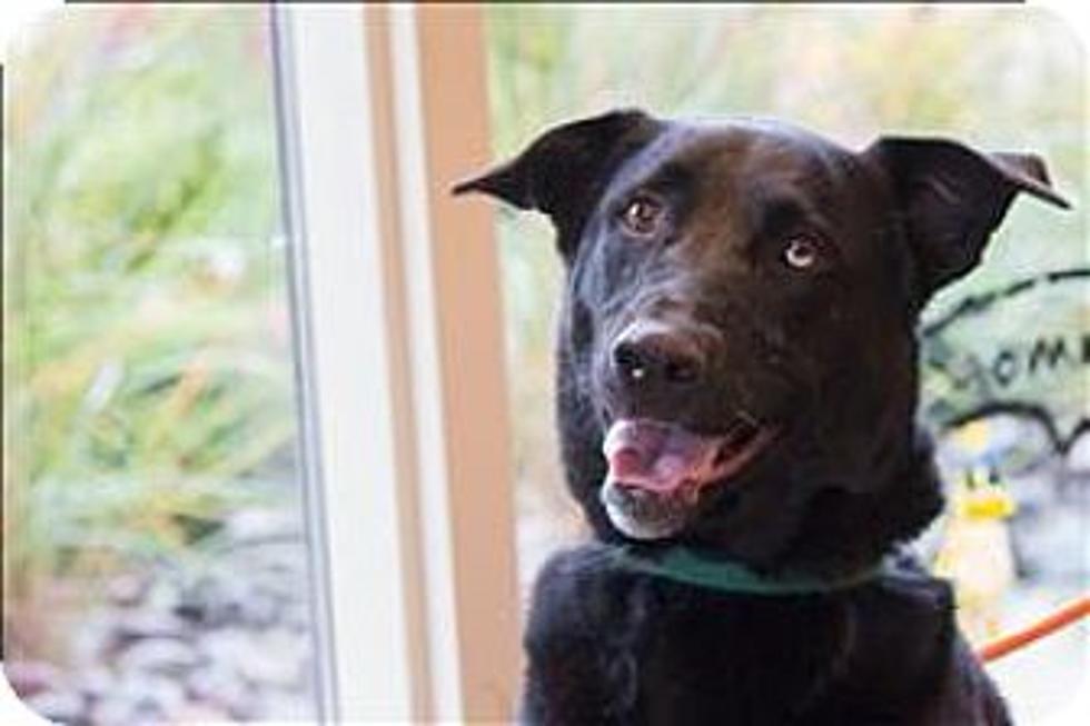 Miller Hill Subaru >> Animal Allies Love A Pet Adoption Event This Saturday