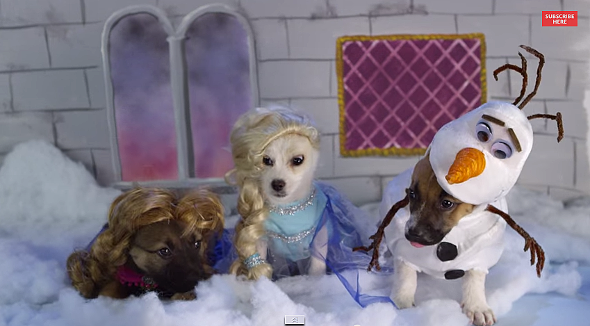 Puppies Dressed Up As Disney Characters