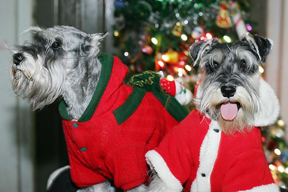 Miller Hill Subaru >> Miller Hill Subaru Is Having Annual Adopt A Pet Event