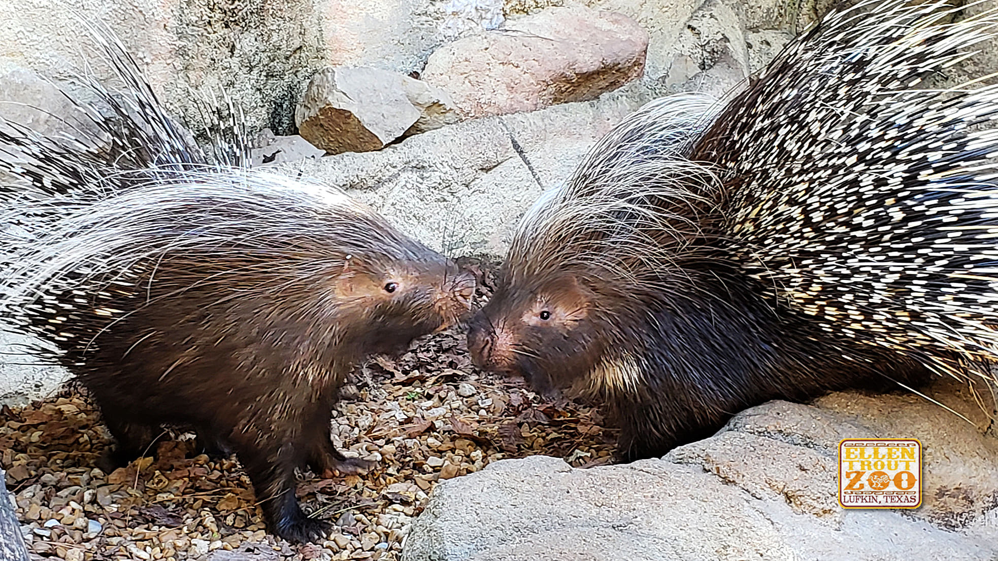 Love is in the Air At Ellen Trout Zoo