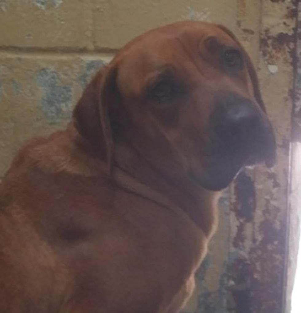 Surrendered Dog Very Sad and Scared at the Texarkana Shelter