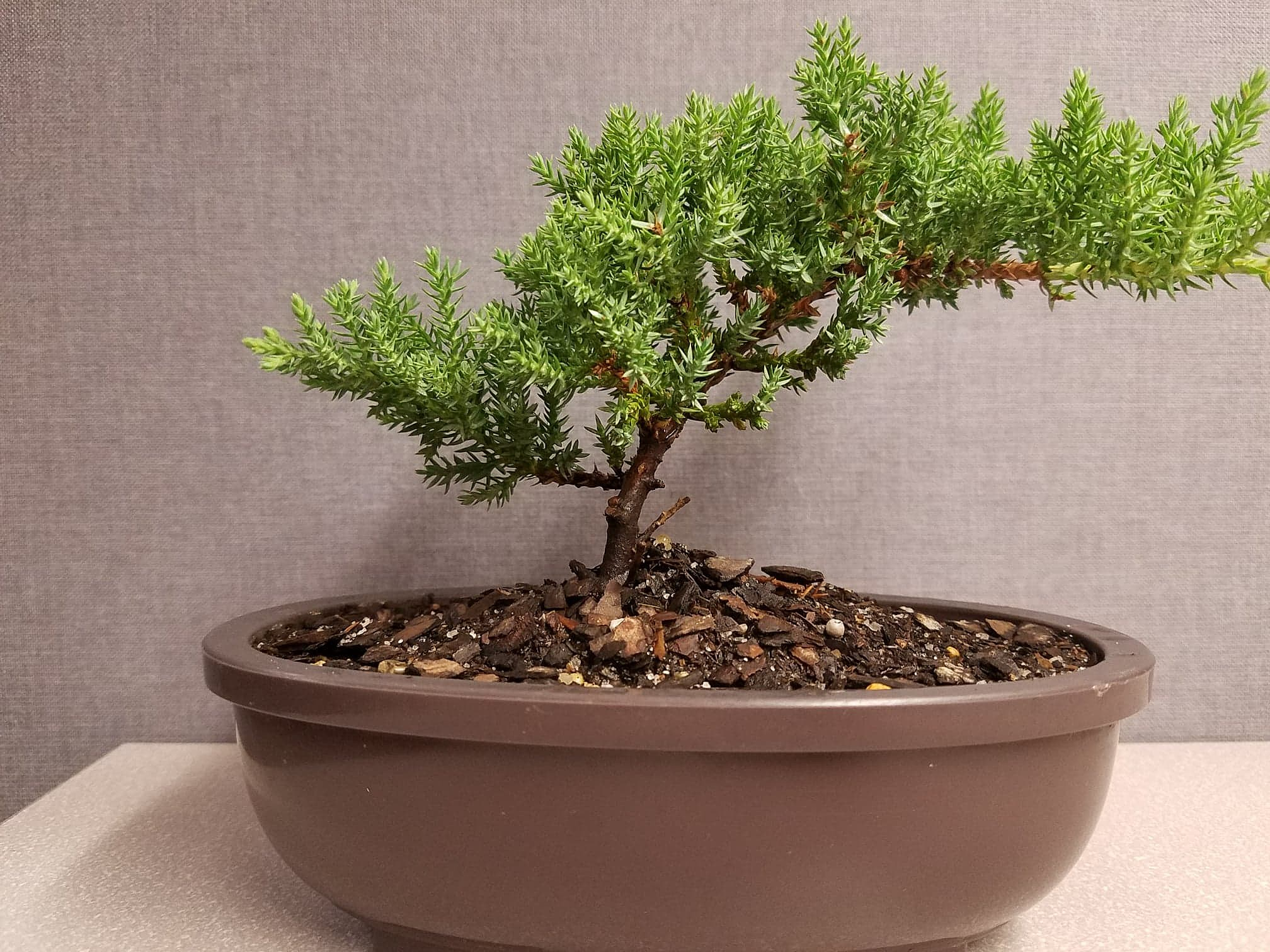 What It Is Like To Visit A Bonsai Tree Stand In Amarillo