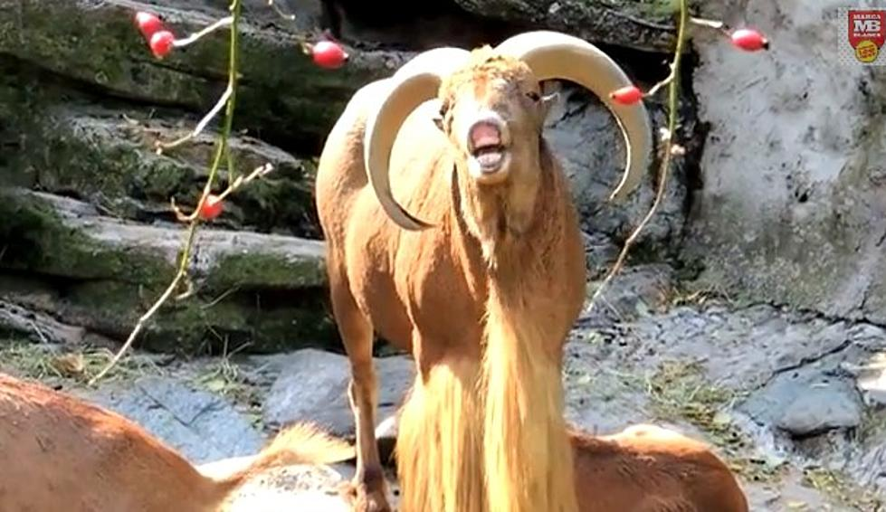 If You Like The Game Of Thrones Theme Check Out Game Of Goats