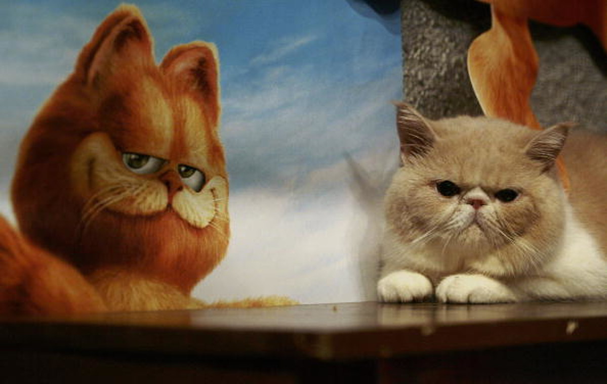 If Garfield The Cat Was Real