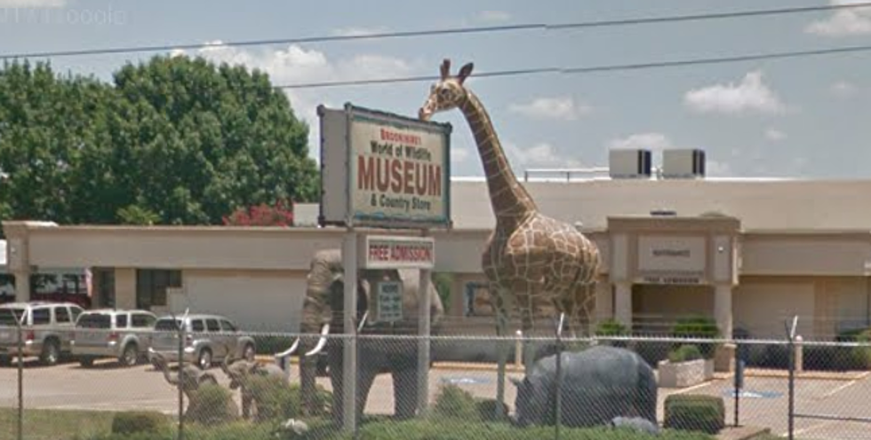 Brookshires World Of Wildlife Museum Closed For Now