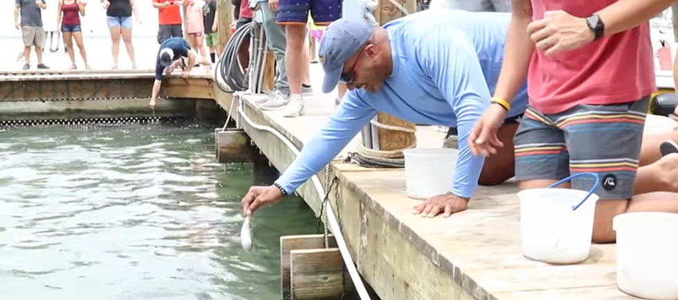 KiddNation Members Feed Tarpon On Their Family Vacation