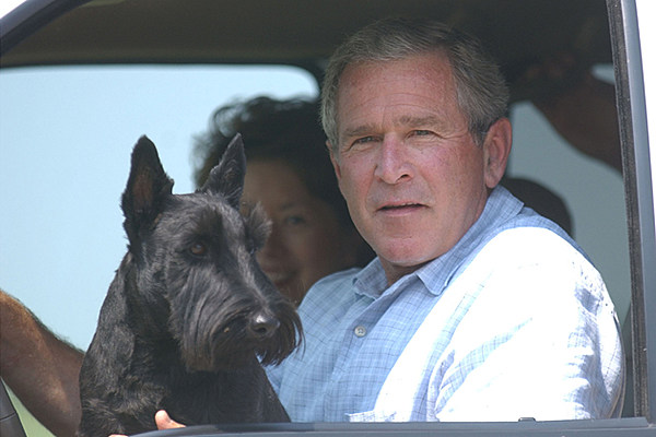 Bush chris george midget rock