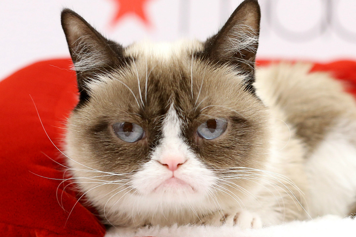 RIP Grumpy Cat — The Internet's Most Famous Cat Has Died